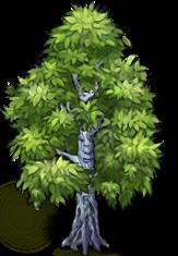 birch-tree-1.png