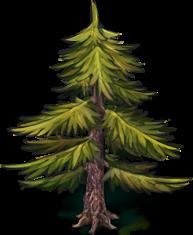 fir-tree-1.png