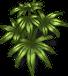hemp-plant-adult.png