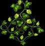 hop-plant-adult.png
