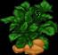 potato-plant-adult.png