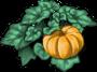 pumpkin-plant-adult.png